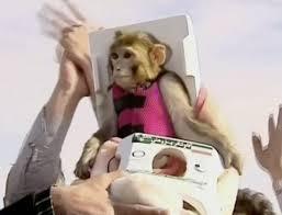 worldleaks monkey back
